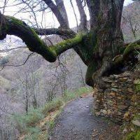 Vereda de la Estrella, senderismo en Sierra Nevada. Granada